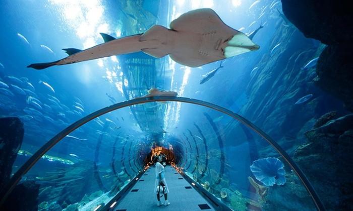 Dubai Aquarium   Groupon