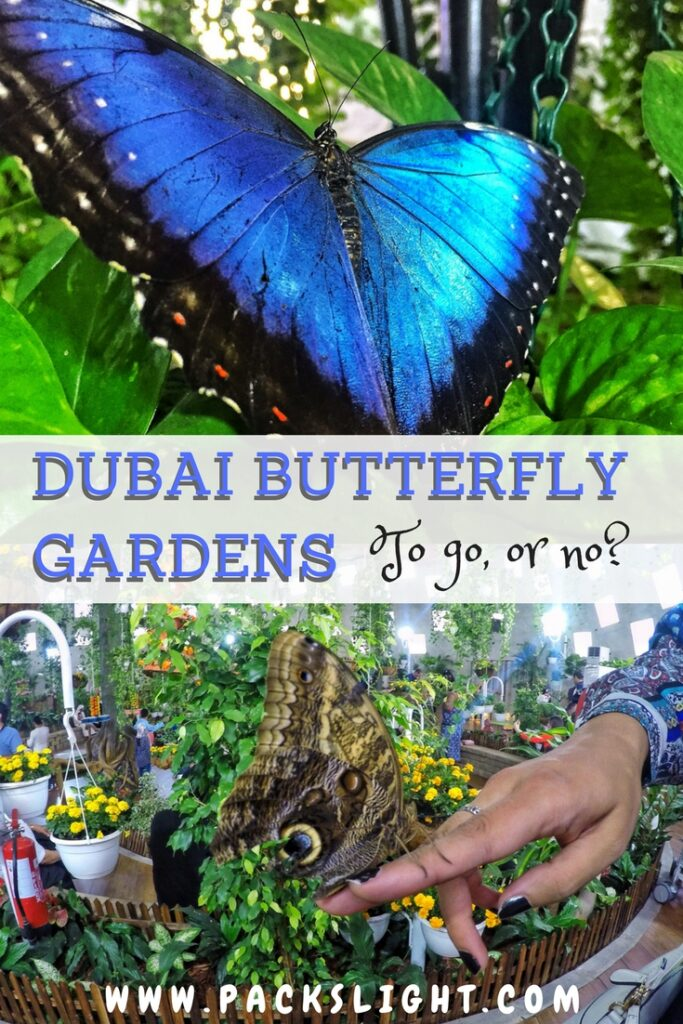 Dubai has a stunning, wonderful garden full of imported butterflies... and I will never go back. Read to find out why.