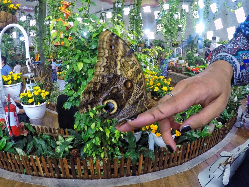 Dubai Butterfly Garden   Packs Light