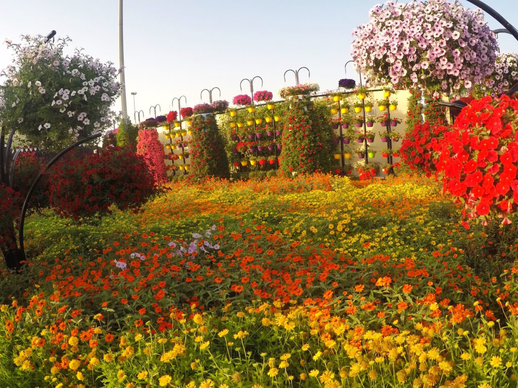 Dubai Miracle Gardens Flowers | Packs Light