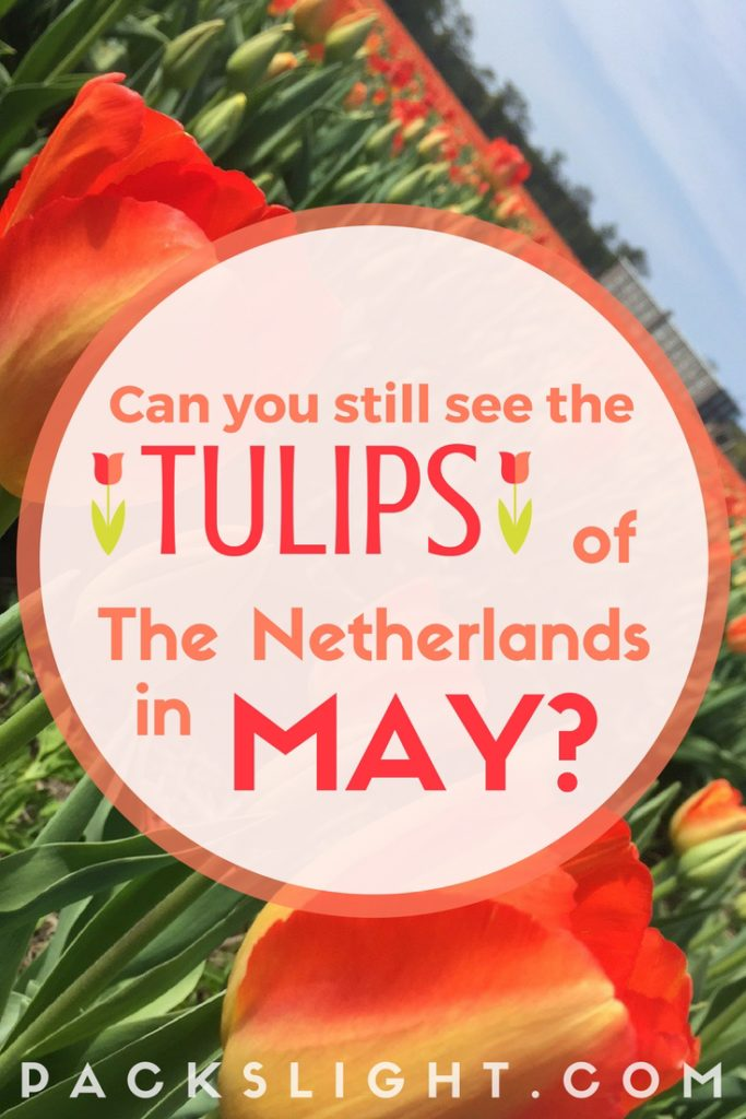 The peak season for seeing the tulip fields of Holland is mid-April. So it possible to se them in May?