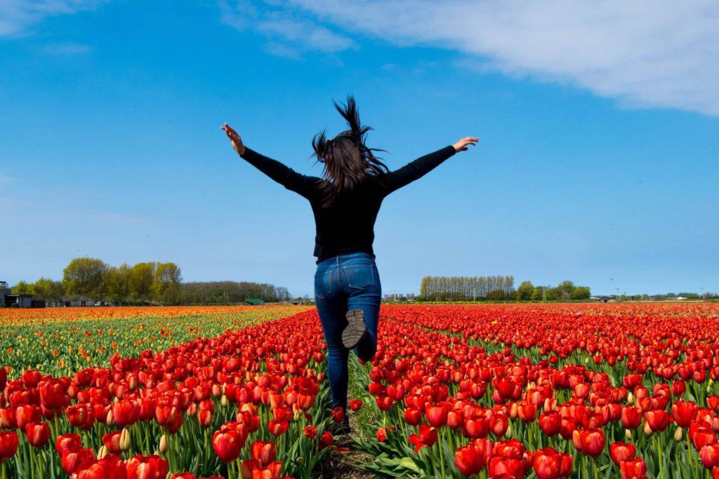 Tulips Netherlands | WanderlustingK.jpg5