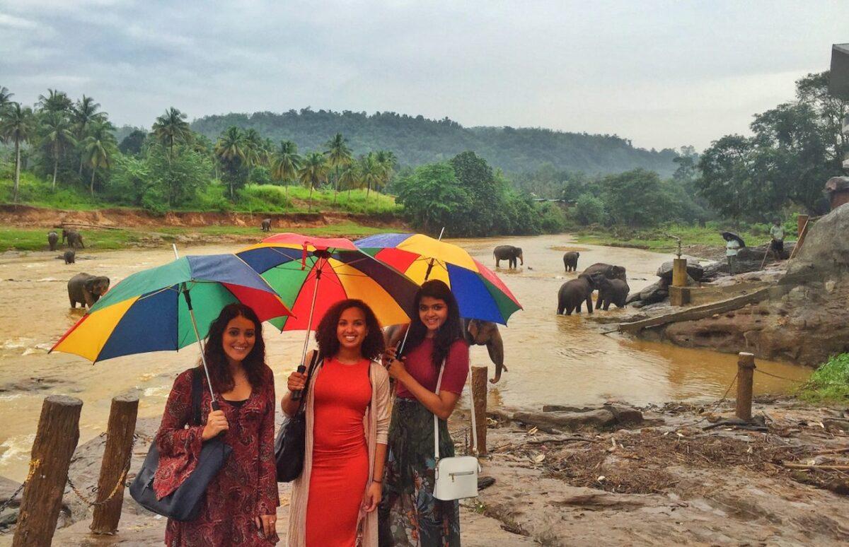 Sri Lanka Elephants   Packs Light
