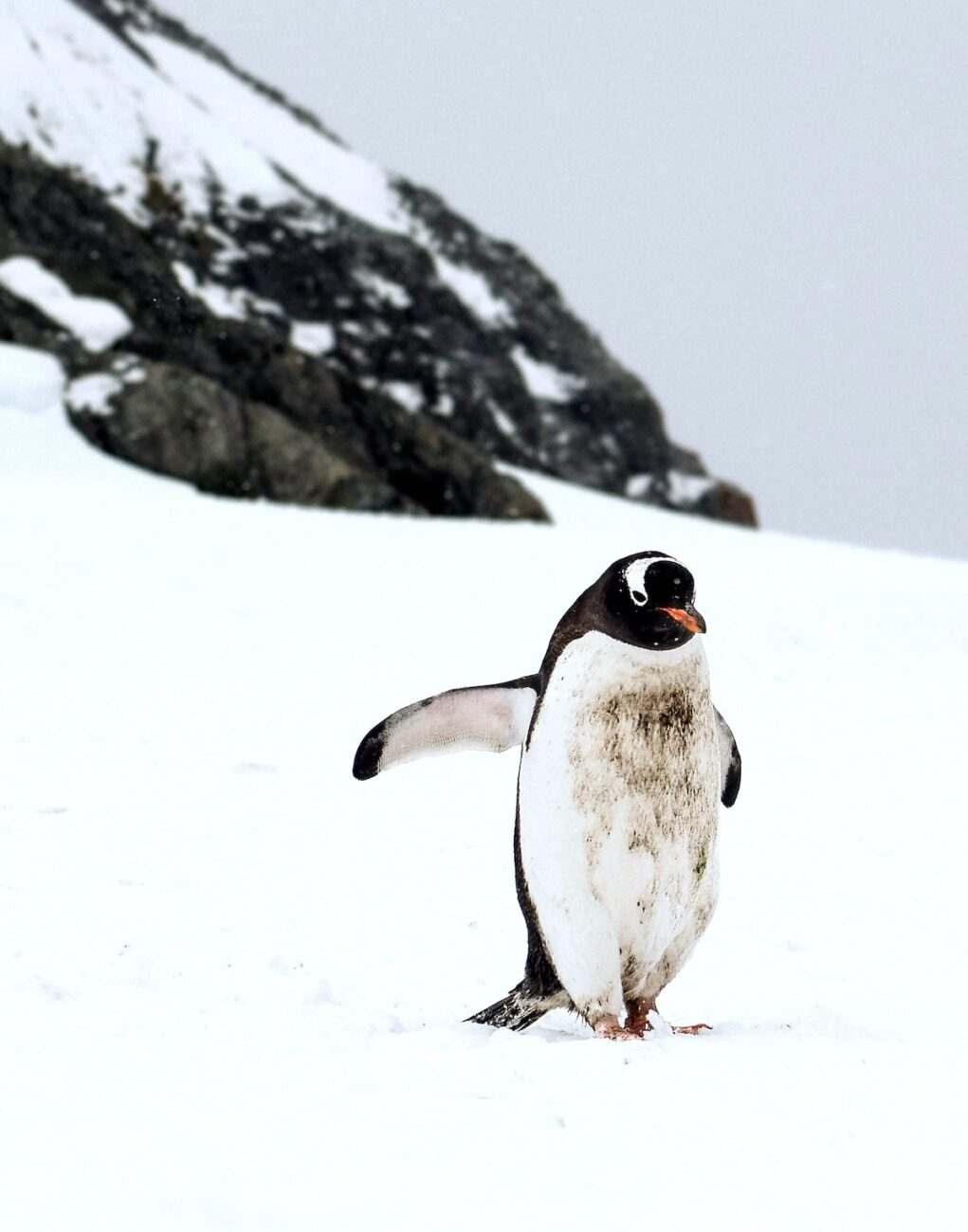 Working in Antarctica as a Polar Expedition Guide   Packs Light