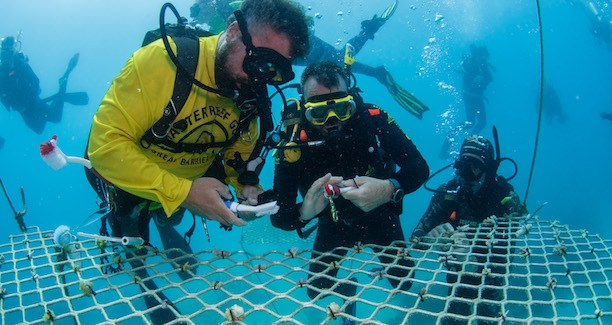 Passions-of-Paradise-Environmental-Sustainability-Coordinator-Russell-Hosp-preparing-coral-fragments-for-the-Hastings-Reef-Nursery-in-Nov-2019-Credt-TEQ-Andrew-Watson